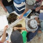 Young scientists at work! Appreciate Your Beach Participants examining beach wrack in Cervantes.
