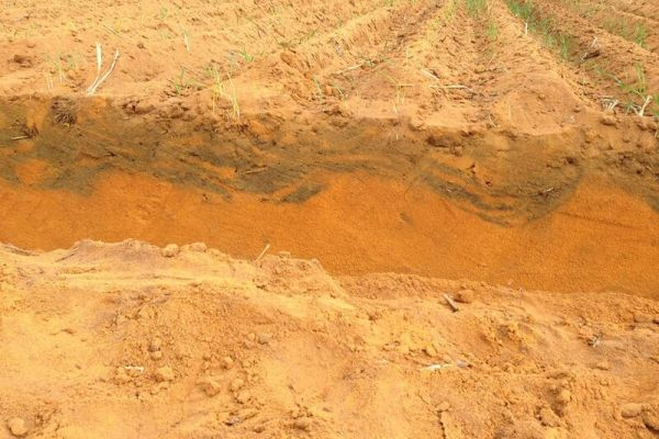 This is the Soil pit of soil acidity treatment demonstrated as part of Innovation project.