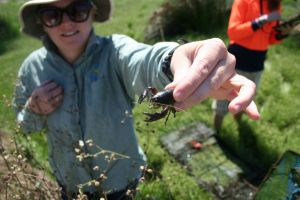 NACC's Biodiversity Program Coordinator holding a Yabby (Cherax destructor).
