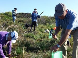 The Dongara/Port Denison community assisted with planting 3,000 seedlings in areas where African boxthorn has been removed around the Irwin estuary.
