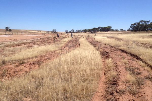 This degraded saline area in a river has been revegetated and nicknamed the 'multipurpose paddock' to allow the farmer to not only reclaim unproductive land but get food and shelter for livestock from it whilst potentially claiming carbon credits.