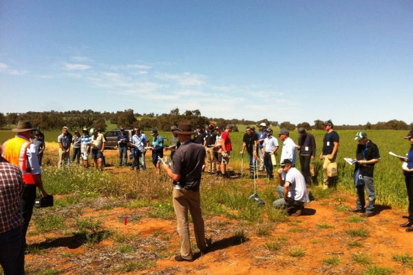 This is the Perennial pastures project which was run in partnership with Evergreen