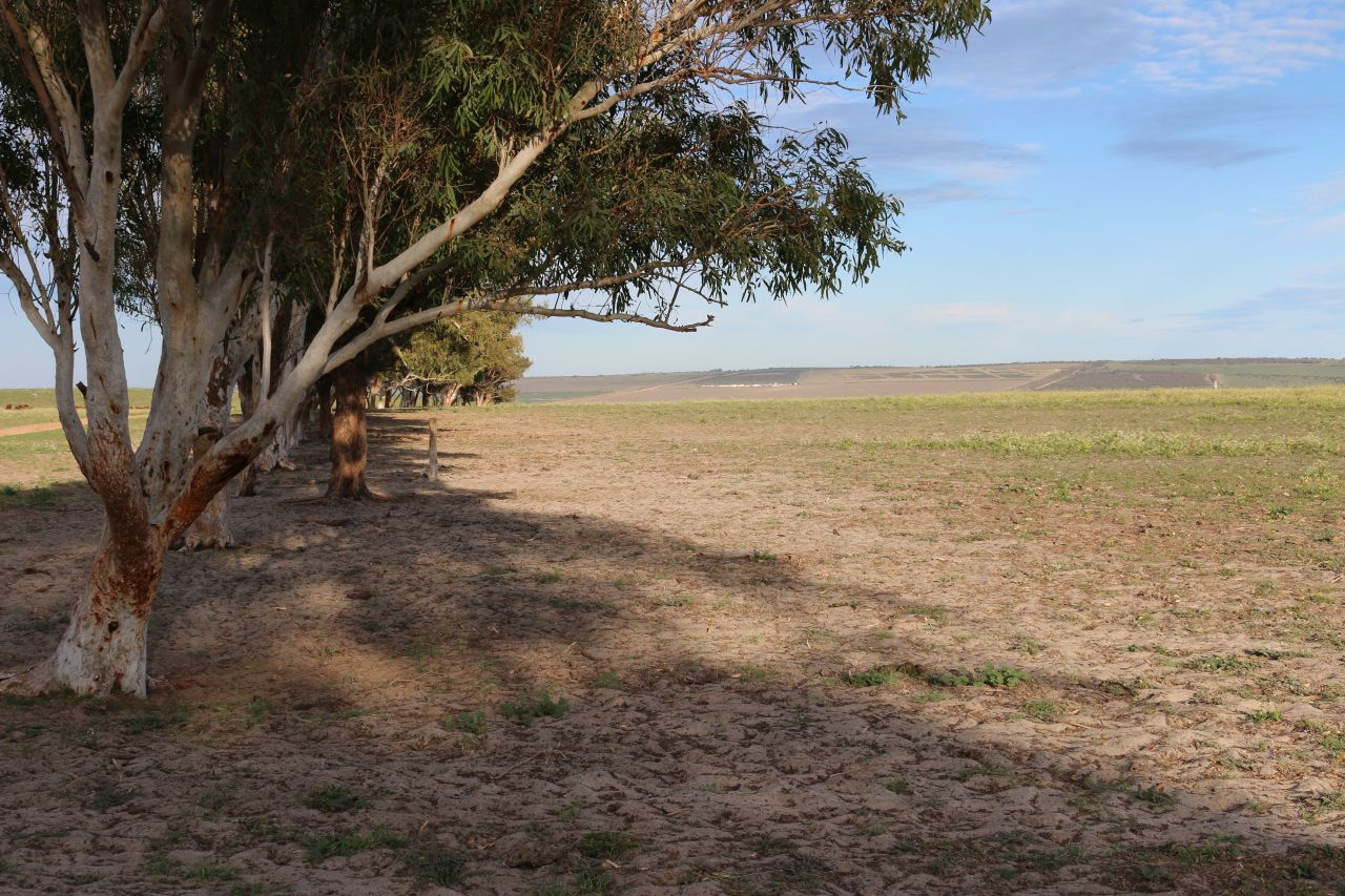 The paddock at the shrub site at Avoca. Picture: Helene Metzinger