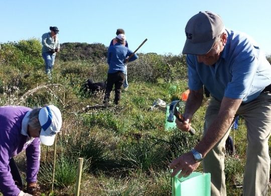 Revegetation taking place at Irwin River estuary.