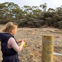 Workplace student Candice Streppel assisting with the NACC team's Biodiversity Program.
