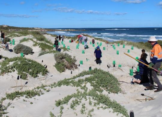 dune work
