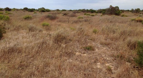 Pyp Grass- Jurien Bay- Shingle Ave- Before 2014