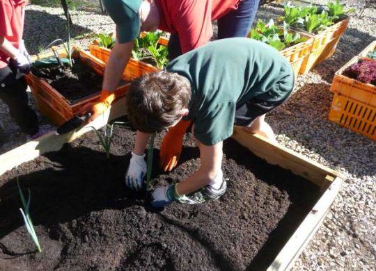 Gingin District Senior High School sustainable school garden project
