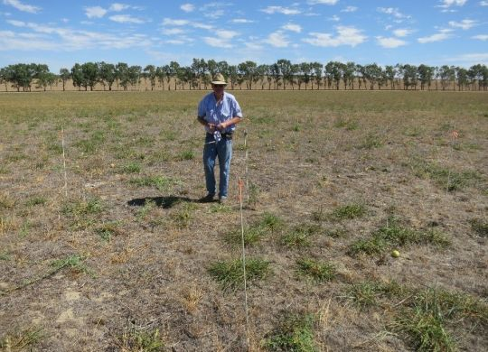 Producer Grant Bain marking out his demonstration site for Ever Green project. Photo Credit Phil Barrett-Lennard.