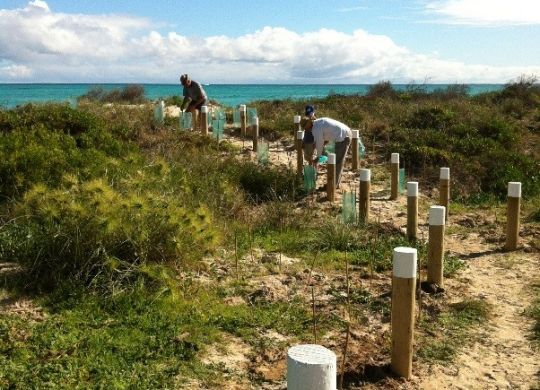 Volunteers came together to help plant seedlings and redefine the Thirsty Point beach entrance point recently.
