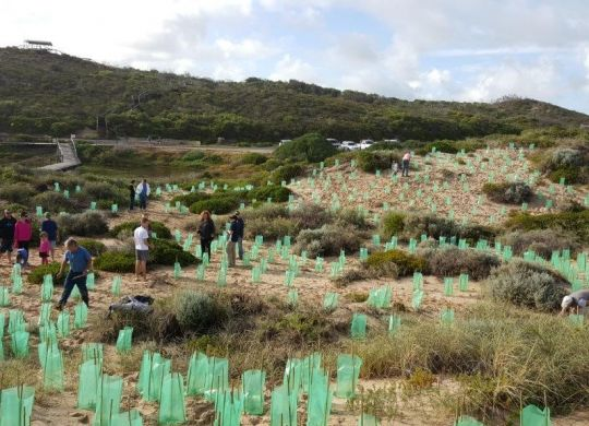 Members of the Irwin Tidy Towns Sustainable Committee and other volunteers work together to rehabilitate vegetation at Nun's Pool.
