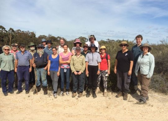Volunteers on the look out for the rare Banksia.