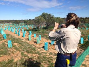 Organisations such as the City of Greater Geraldton are taking up the Photomon app to monitor on-ground works such as revegetation.