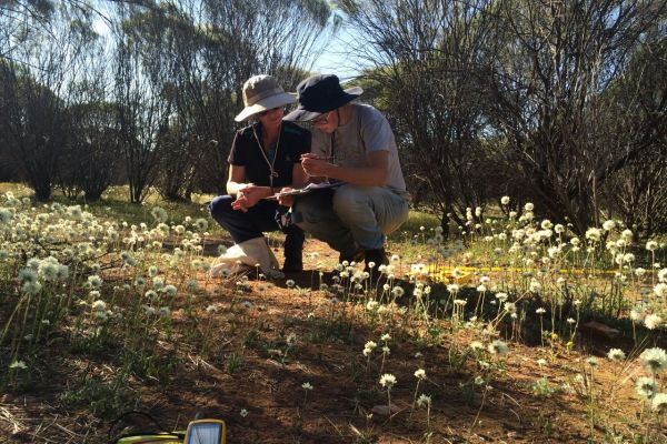 NRM Officers Jude Sutherland and Sarah Gilleland identifying plants while conducting a site visit for NACC's fencing incentive project.