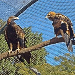 PilRoc Retreat is a wildlife orphanage and dedicated to the rescue and rehabilitation of orphaned and injured wildlife.