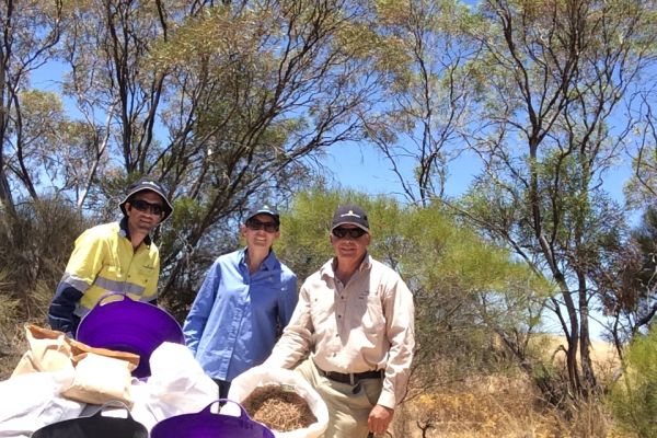 Seed collection, Greening Australia and NACC staff