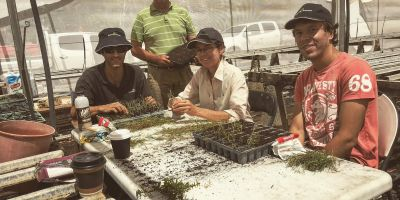 Seedling propagation with the team from Greening Australia