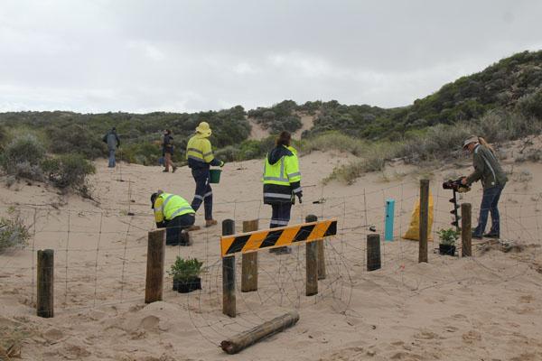 Iluka Dune Planting Site 3 at Buller
