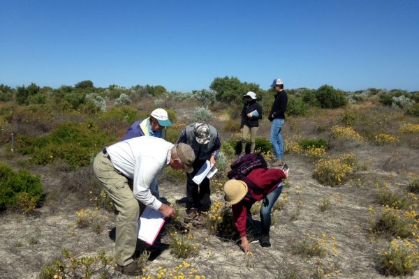 The Jurien Bay Regional Herbarium Group conducts the annual quadrat survey of control sites.