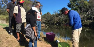 Chapman River with BCMI Tilapia project