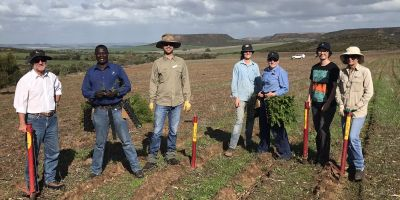 DBCA andf NACC staff planting Declared Rare Fauna at Moresby Range