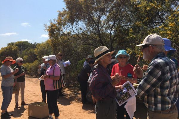 Many happy people enjoying the wildflowers at Wonthella Reserve with Freinds of Geraldton Gardens.
