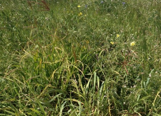 1512-05-07 Jurien Bay Plot 4 (+ fertiliser) September 2015 credit PBL