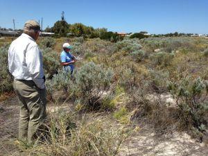 Volunteers from Jurien Bay Regional Herbarium Group conducting Pyp grass quadrat surveys