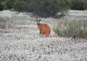 Photo credit: Dale Fuller – Bush Heritage Australia.