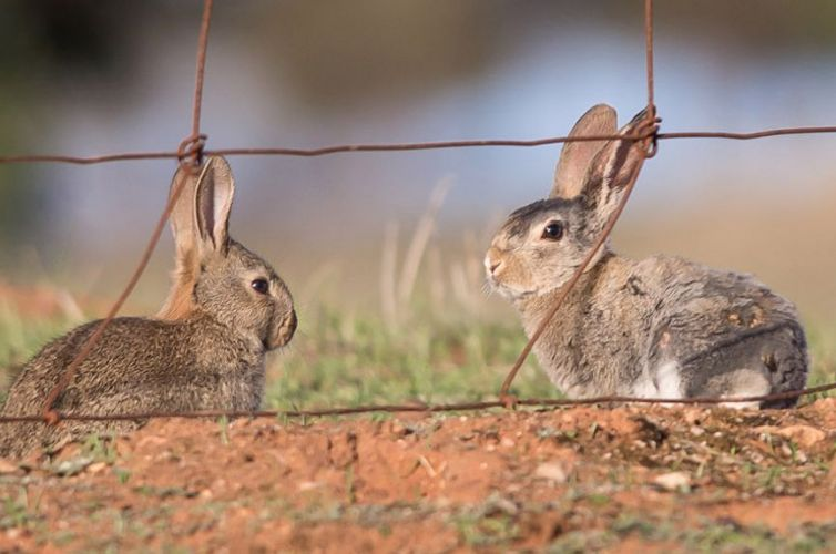 Rabbit Awareness Project