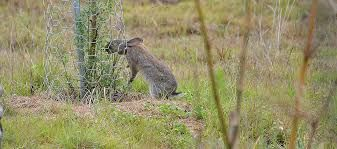 image rabbit