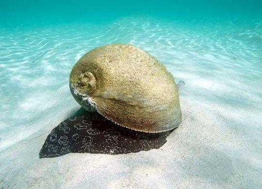 Baler Shell