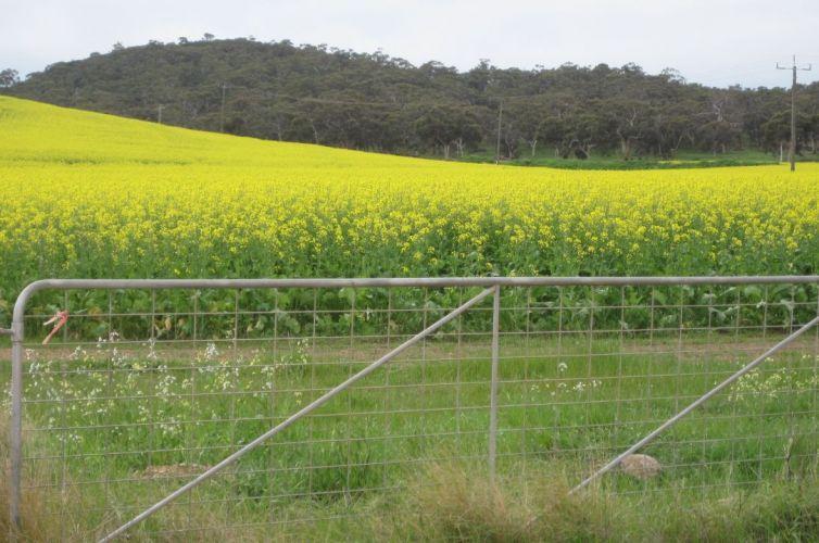 Regional Agricultural Landcare Facilitator