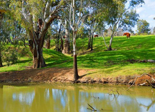 rural-scene-ausralia-1