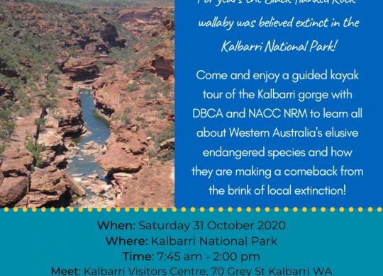 Black flanked Rock wallaby Kayak tour 2020