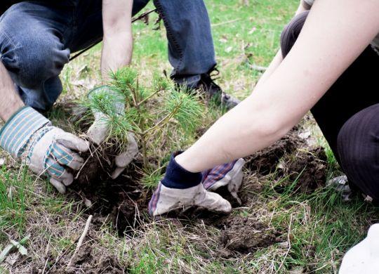 Carbon laoding soil