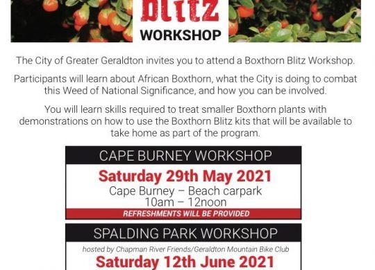 Boxthorn Workshop Flyer
